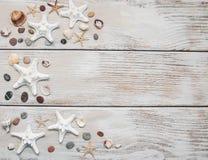 Conchas marinas y frontera de las estrellas de mar Imagen de archivo