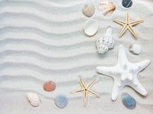 Conchas marinas y frontera de las estrellas de mar Foto de archivo libre de regalías