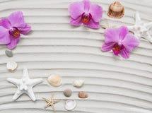 Conchas marinas y frontera de las estrellas de mar Imágenes de archivo libres de regalías