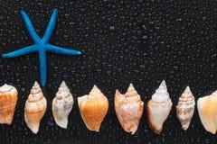 Conchas marinas y mentira de las estrellas de mar en una línea imagen de archivo