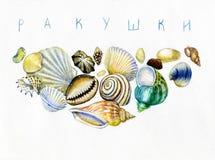 Conchas marinas y piedras foto de archivo libre de regalías