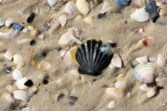Conchas marinas y playa mojadas de la arena en el verano Foto de archivo