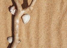 Conchas marinas y rama seca en la arena Fotografía de archivo libre de regalías