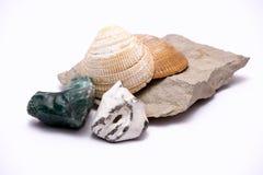 Conchas marinas y rocas Imagen de archivo