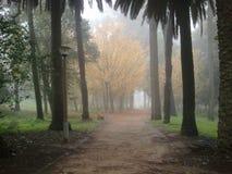 Conchas Park early morning fog. Conchas Park in Lisboa, early morning fog Stock Photography