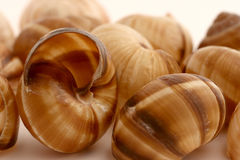 Conches Stock Images