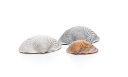 Conches on white background Royalty Free Stock Images