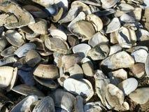 Conchiglia alla spiaggia fotografie stock libere da diritti