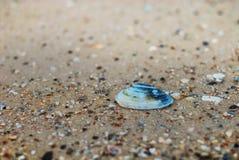 Conchiglia blu sulla sabbia Fotografie Stock