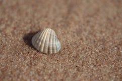 Conchiglia che si trova sulla spiaggia Fotografia Stock Libera da Diritti