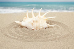 Conchiglia con la sabbia con il mare nel fondo Fotografia Stock Libera da Diritti