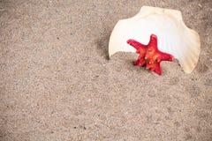 Conchiglia con le stelle marine in sabbia Fotografia Stock Libera da Diritti
