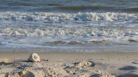 Conchiglia dello zoom che si trova sulla spiaggia di sabbia stock footage