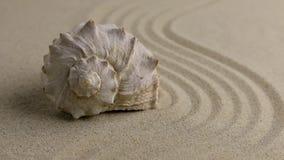Conchiglia dello zoom che si trova sulla spiaggia di sabbia video d archivio