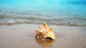 Conchiglia di film del movimento lento sulla spiaggia dell'oceano della sabbia alla luce del sole con le onde stock footage