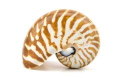 Conchiglia di nautilus a temperatura ambiente isolata su fondo bianco Fotografie Stock