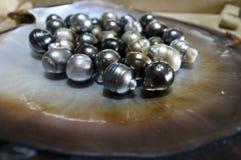Conchiglia di ostrica nera del labbro di Figi con la selezione delle perle nere Fotografia Stock