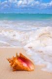 Conchiglia di strombo sulla spiaggia. Fotografia Stock