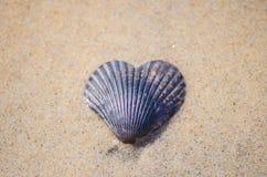 Conchiglia a forma di del cuore nella sabbia Immagini Stock Libere da Diritti