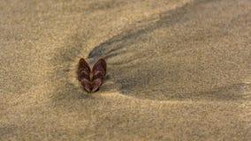 Conchiglia a forma di del cuore sulla sabbia della spiaggia fotografia stock
