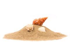 Conchiglia isolata sulla sabbia Fotografia Stock Libera da Diritti