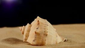 Conchiglia marina insolita sulla sabbia, il nero, rotazione video d archivio