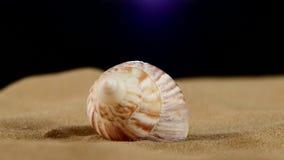 Conchiglia marina rosa insolita sulla sabbia, rotazione video d archivio