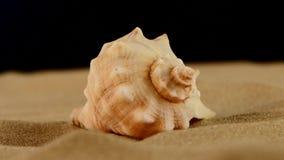 Conchiglia marina usuale sulla sabbia, il nero, rotazione archivi video
