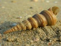 Conchiglia nella sabbia Fotografia Stock