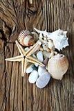 Conchiglia, pietra del mare e raccolta della raccolta delle stelle marine su una tavola di legno Fotografia Stock