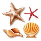 Conchiglia realistica 3d, insieme di vettore delle stelle marine royalty illustrazione gratis