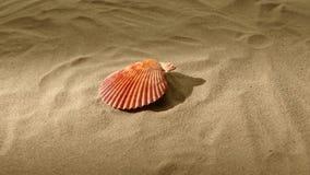 Conchiglia, rosa, sulla sabbia, luce posteriore, rotazione stock footage