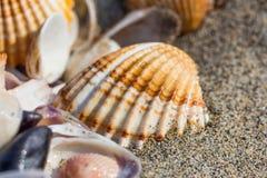 Conchiglia sulla fine della spiaggia di sabbia su Fotografia Stock