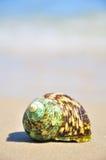 Conchiglia sulla riva di mare Fotografia Stock Libera da Diritti