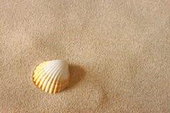 Conchiglia sulla sabbia della spiaggia fotografia stock