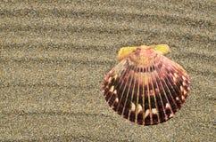 Conchiglia sulla sabbia della spiaggia dell'oceano con lo spazio della copia Lo sfondo naturale per l'estate, viaggia, si rilassa fotografia stock