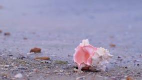 Conchiglia sulla spiaggia video d archivio
