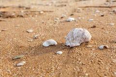 Conchiglia sulla spiaggia fotografie stock libere da diritti