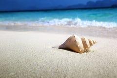 Conchiglia sulla spiaggia fotografia stock
