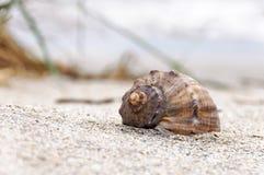 Conchiglia sulla spiaggia Immagini Stock Libere da Diritti