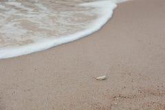 Conchiglia sulla spiaggia Immagine Stock
