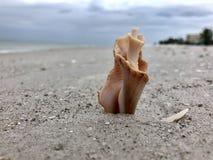 Conchiglia sulla spiaggia dell'oceano Fotografie Stock