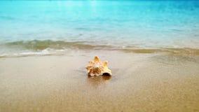 Conchiglia sulla spiaggia dell'oceano della sabbia video d archivio