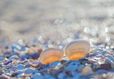 Conchiglia sulla spiaggia di estate Fotografia Stock Libera da Diritti