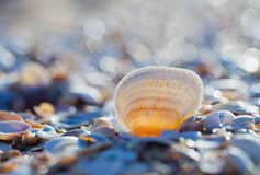 Conchiglia sulla spiaggia di estate Immagine Stock