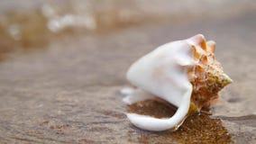 Conchiglia sulla spiaggia di sabbia alla luce del sole con il backround delle onde stock footage