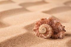 Conchiglia sulla spiaggia nella sabbia immagine stock