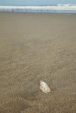 Conchiglia sulla spiaggia sabbiosa con il mare nel fondo Fotografia Stock Libera da Diritti