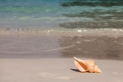 Conchiglia sulla spiaggia fotografia stock libera da diritti