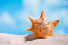 Conchiglia tropicale della conchiglia con l'oceano, la spiaggia e la vista sul mare Immagine Stock